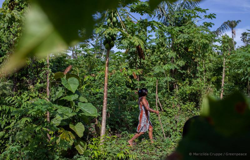 proteção da Amazônia