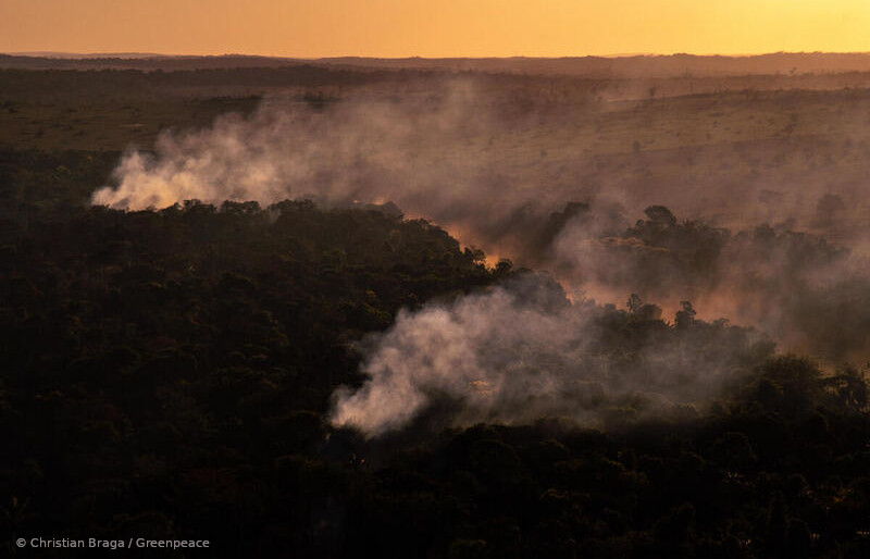 queimadas Amazônia perda biodiversidade